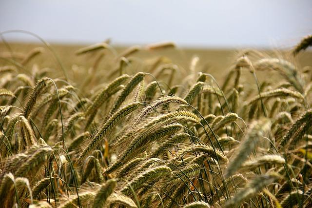 Ein Feld als Symbol für förderliche Rahmenbedingungen für unsere Landwirtschaft